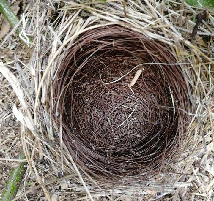 11-photo-nid-d'oiseaux