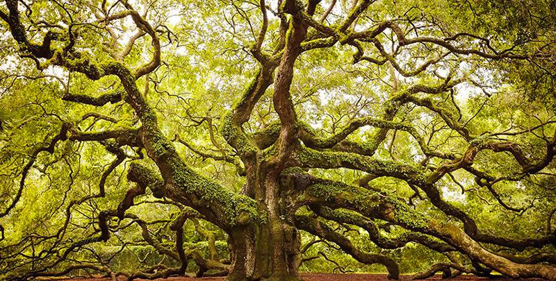 2 arbre majestueux eclaircie