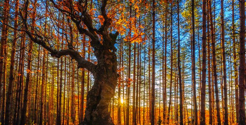 4 photo arbres forêt