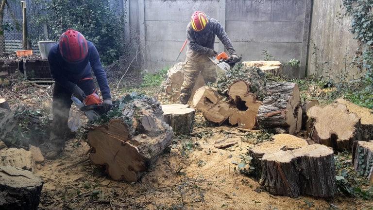 5 photo abattage arbre Le Bouscat